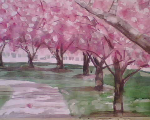 cherry-blossoms-1-08-in-progress.jpg