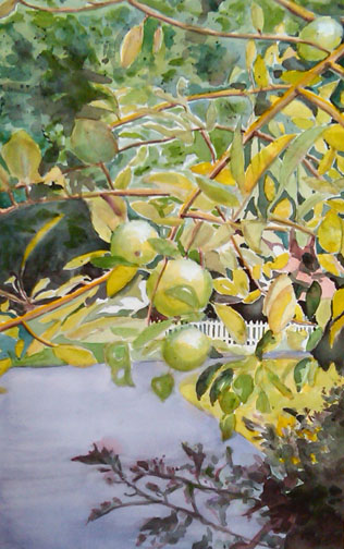 crab apples - finished 8-9-09