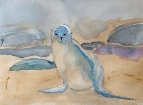 Galapagos Sea Lion  WIP  3-10-2013