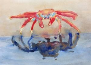 Sally lightfood crab 3-19-2013
