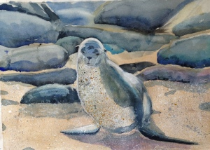 Sandy Sea Lion 3-17-2013