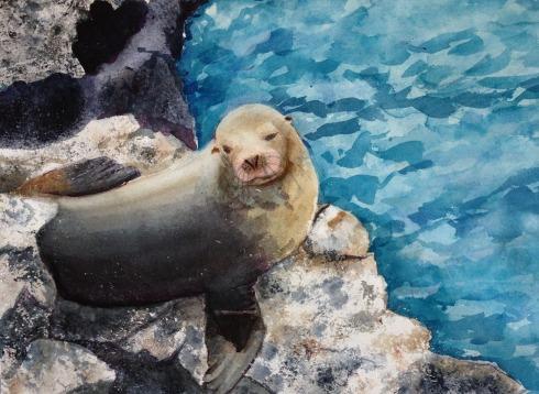 sea lion on the rocks 6-9-13