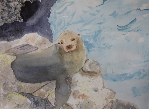 sealion on the rocks WIP 6-2-13