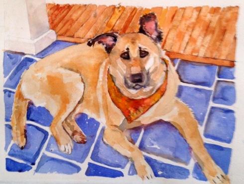 My doggie - 1-5-2014
