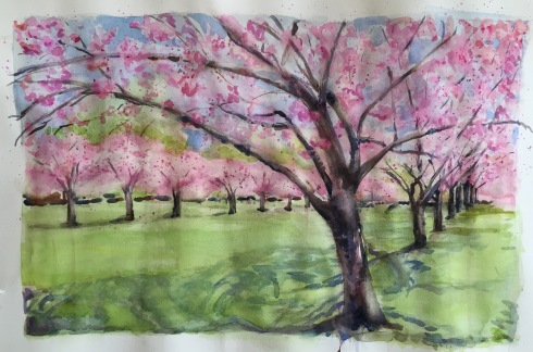 Cherry Blossoms 1-11-15