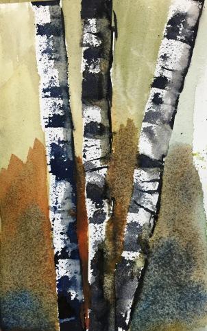 Birch trees 1-31-15
