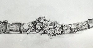branch with lichen