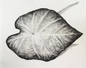 caladium leaf