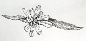 flower pen and ink